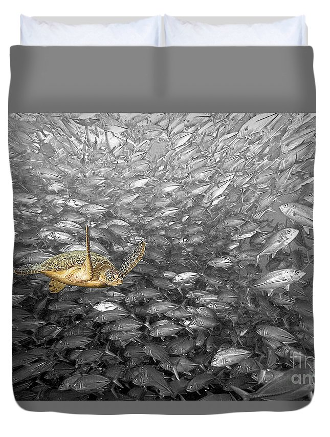 Animal Art Duvet Cover featuring the photograph Turtle And Fish School by Dave Fleetham - Printscapes