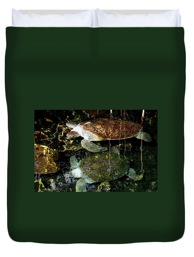 Turtle Duvet Cover featuring the photograph Turtles by Angela Murray