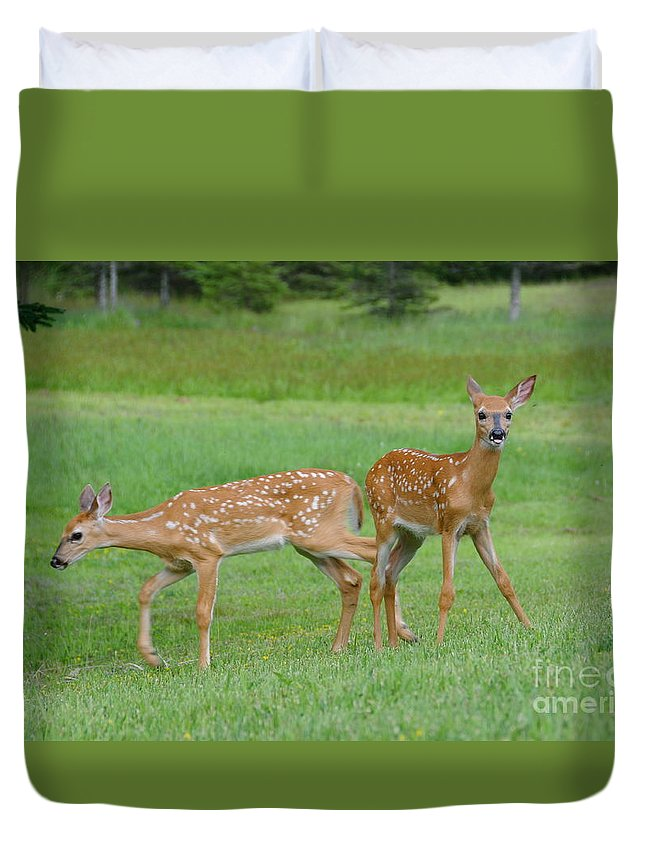 Spotted Fawns Duvet Cover featuring the photograph Twin Fawns Playing by Sandra Updyke