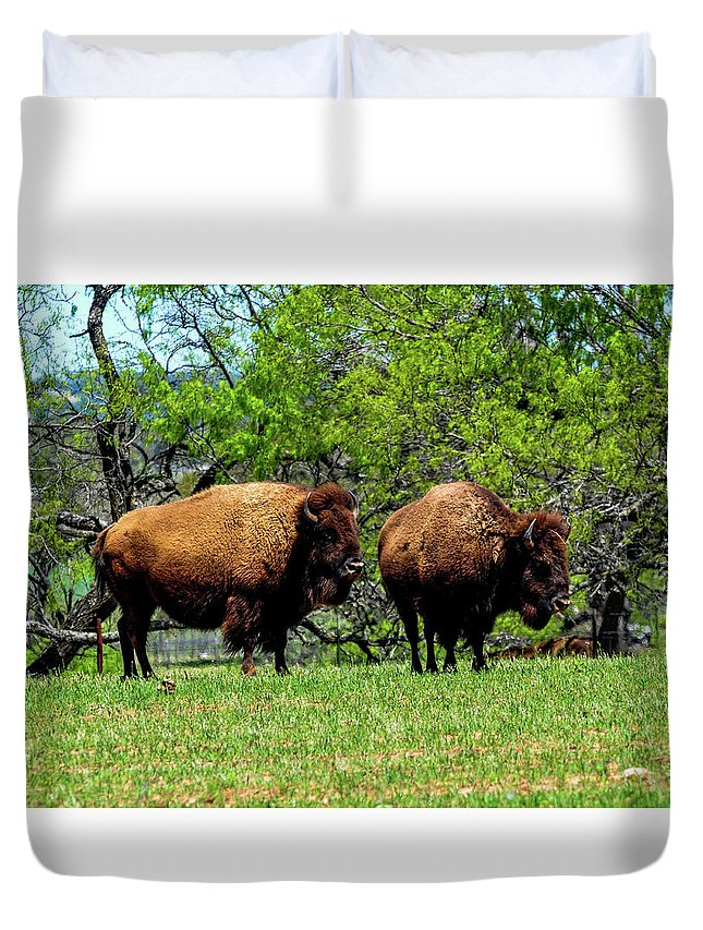 Texas Duvet Cover featuring the photograph Two Buffalo by Marilyn Burton