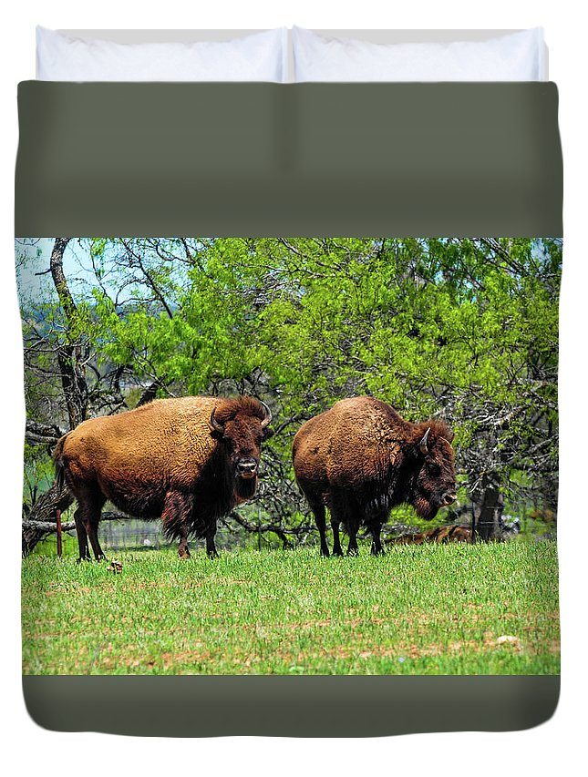 Texas Duvet Cover featuring the photograph Two Buffalo Standing by Marilyn Burton