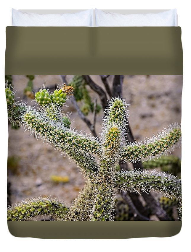 Mark Myhaver Duvet Cover featuring the photograph Two Cholla Friends by Mark Myhaver