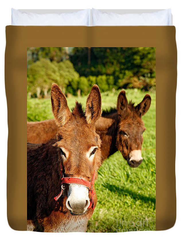 Animals Duvet Cover featuring the photograph Two Donkeys by Gaspar Avila