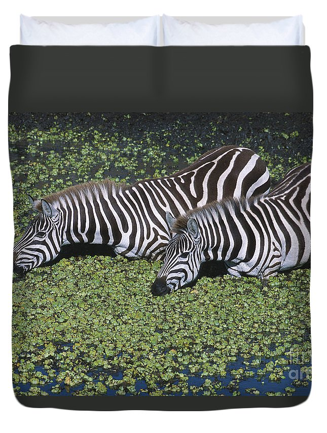 Zebra Duvet Cover featuring the photograph Two For Lunch by Sandra Bronstein