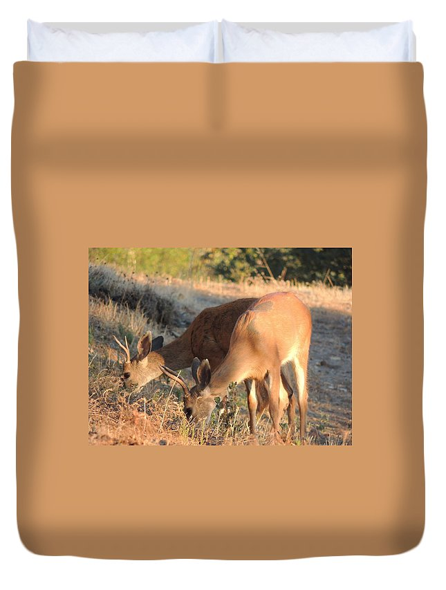 Deer Duvet Cover featuring the photograph Two Forked Horns by Traci Hallstrom