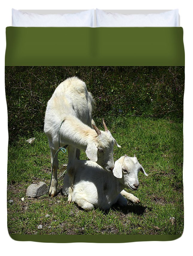 Goat Duvet Cover featuring the photograph Two Goats In A Pasture by Robert Hamm
