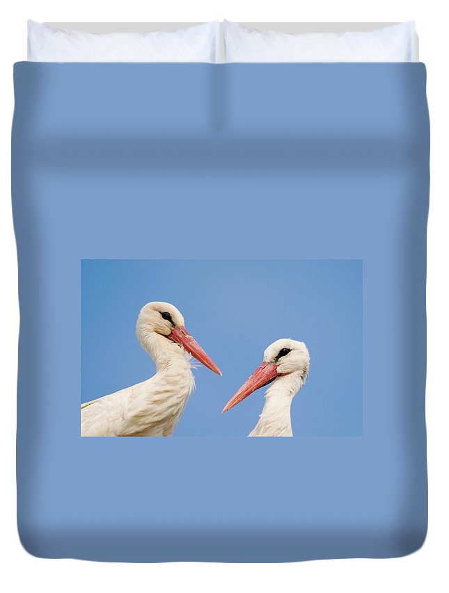White Stork Duvet Cover featuring the photograph Two Heads by Cliff Norton