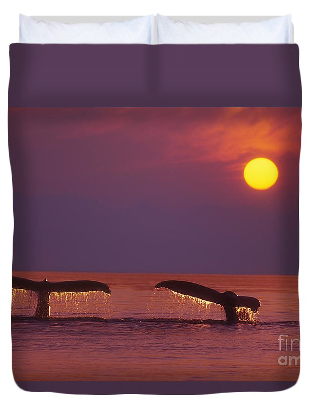 Afternoon Duvet Cover featuring the photograph Two Humpback Whales by John Hyde - Printscapes