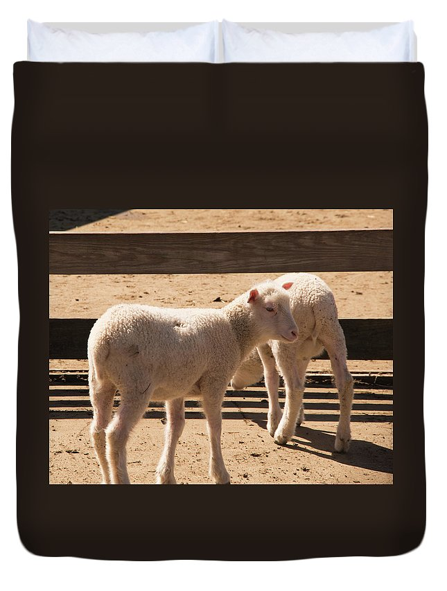 Sheep Duvet Cover featuring the photograph Two Little Lambs. by Diane Schuler