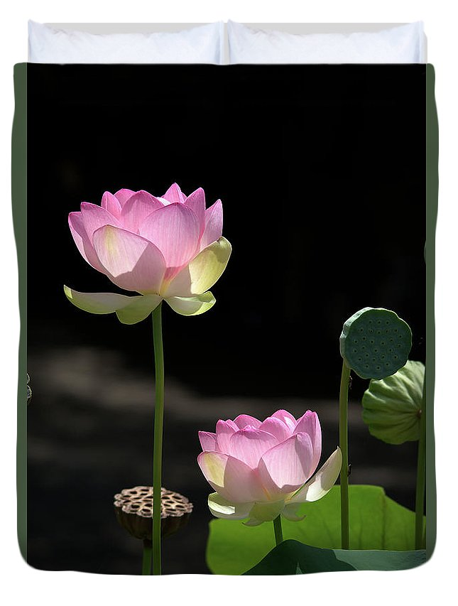 Roy Williams Duvet Cover featuring the photograph Two Pink Water Lilies by Roy Williams