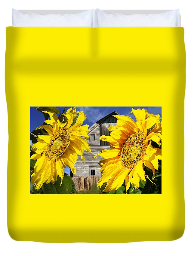 Sunflower Duvet Cover featuring the photograph Two Sunflowers by Donald Erickson