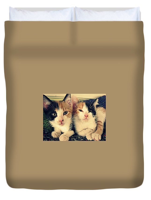 Tabby Cat Duvet Cover featuring the photograph Two Tabby Cat Kittens by Fern Cardinal