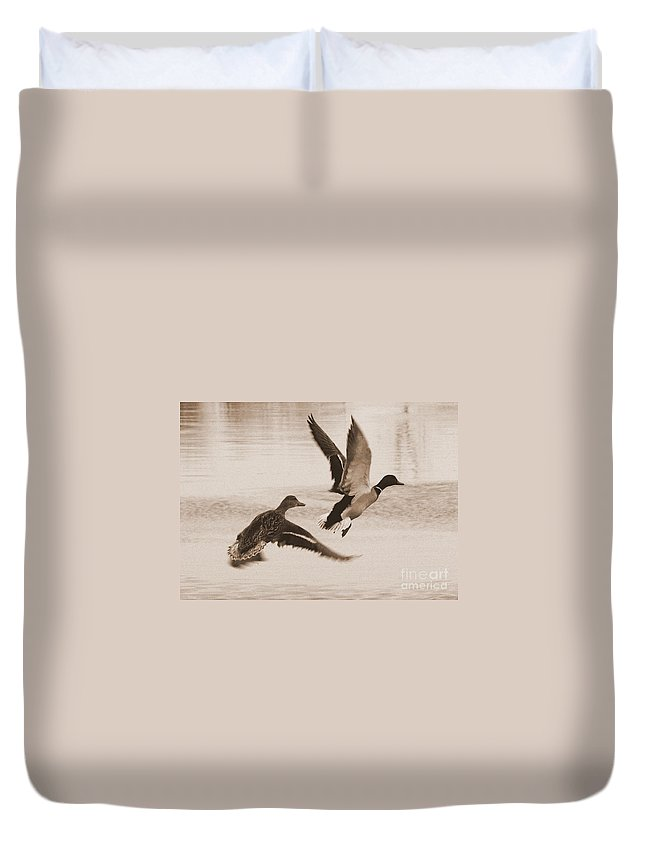 Ducks Duvet Cover featuring the photograph Two Winter Ducks In Flight by Carol Groenen