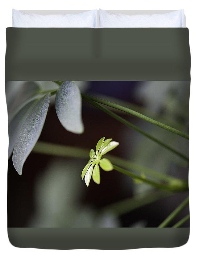 Umbrella Duvet Cover featuring the photograph Umbrella Plant by Steven Dunn