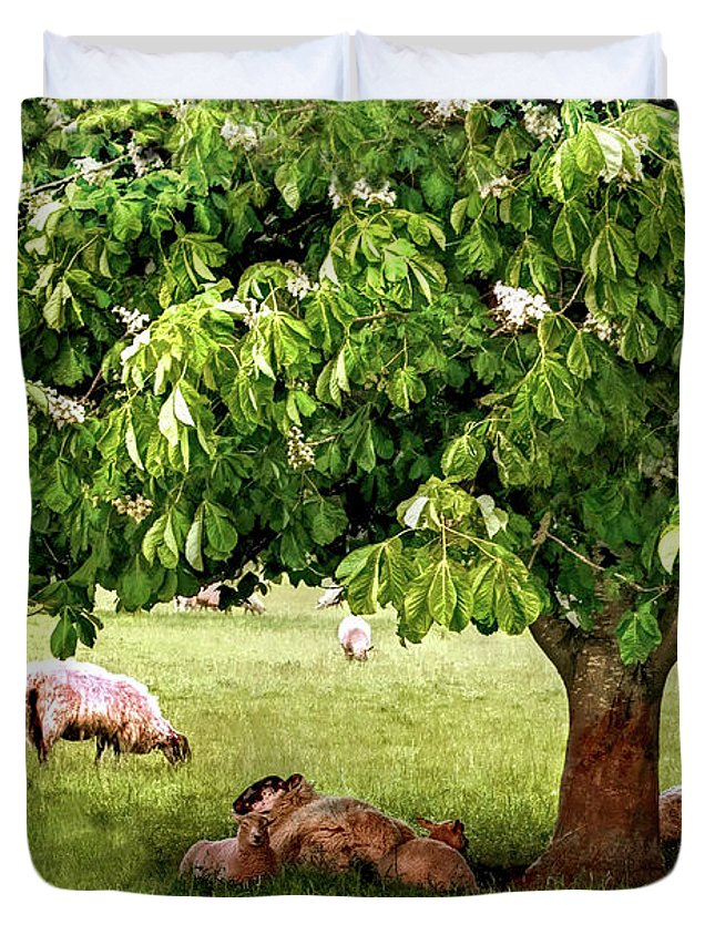 Trees Duvet Cover featuring the photograph Umbrella Tree by Pennie McCracken