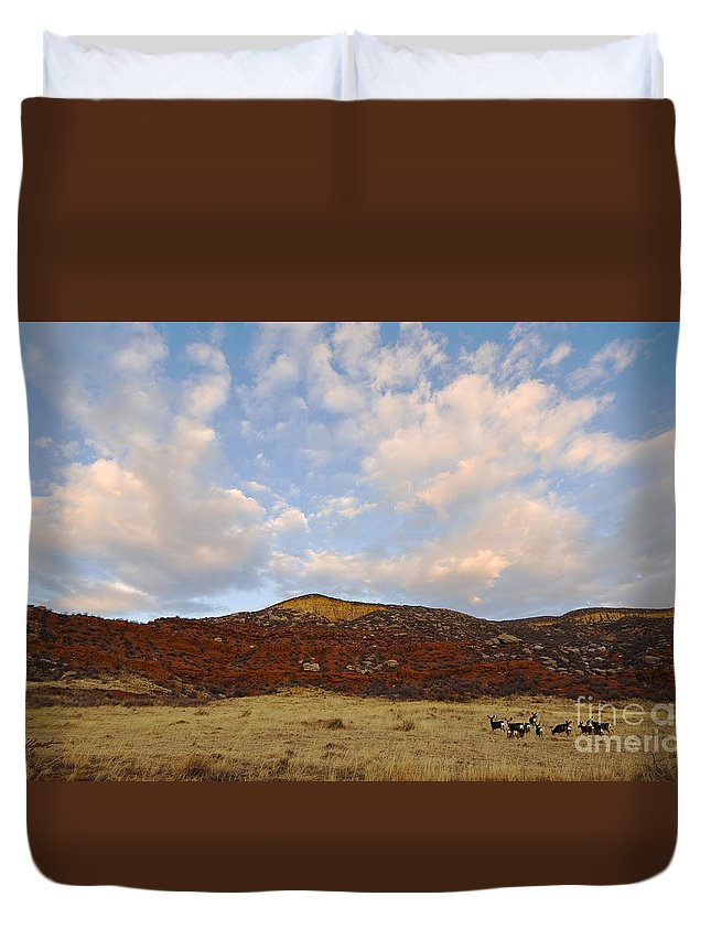 Mule Deer Duvet Cover featuring the photograph Under The Colorado Sky by Jim Fillpot