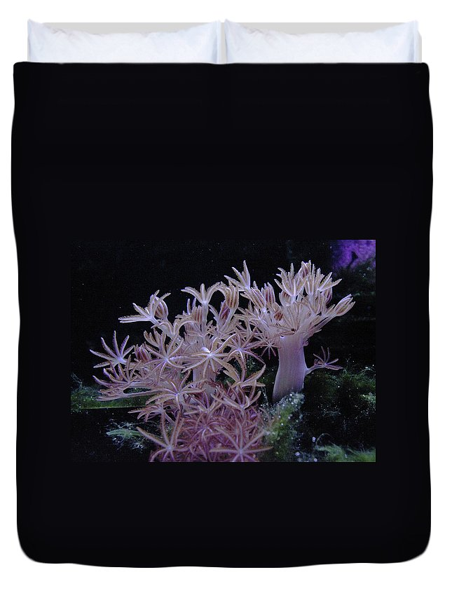 Sea Plant Life Duvet Cover featuring the photograph Under Water by Jeff Swan