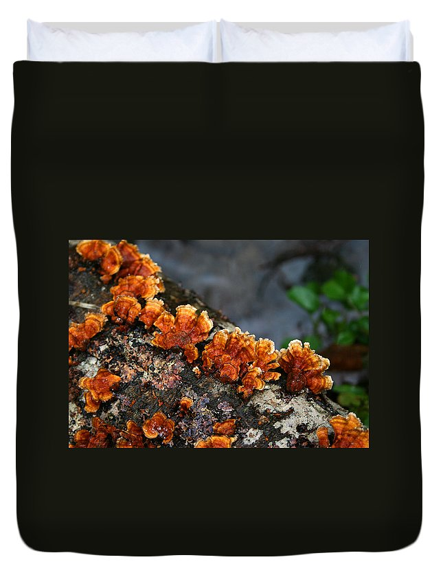 Bright Orange Nature Wet Forest Fungus Tree Wood Closeup Macro Duvet Cover featuring the photograph Unexpected Brightness by Andrei Shliakhau
