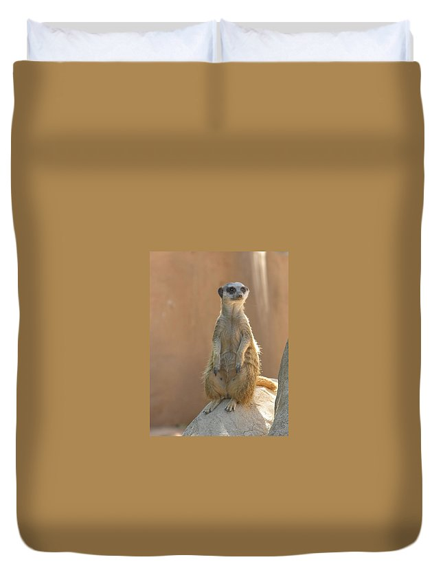 Animails Duvet Cover featuring the photograph Untitled by Diane Greco-Lesser
