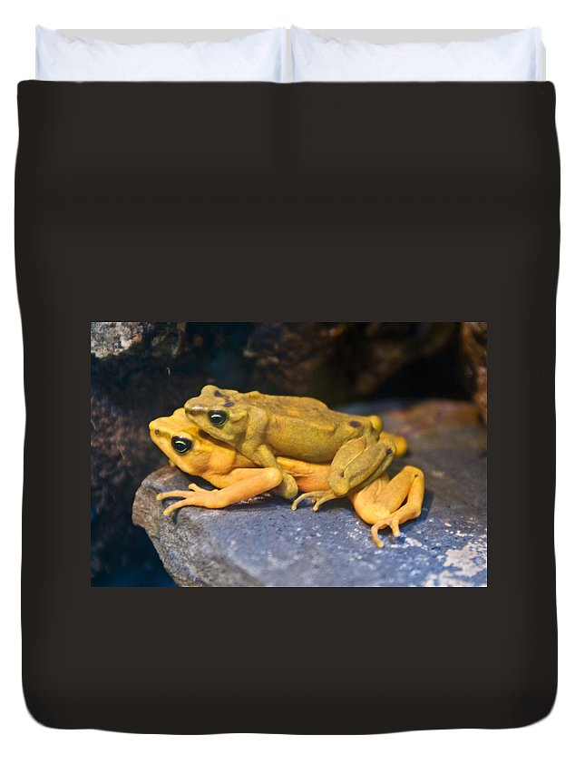Frogs Duvet Cover featuring the photograph Up Close And Personal by Douglas Barnett