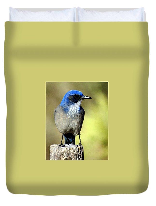 Birds Duvet Cover featuring the photograph Utah Bird by Marty Koch