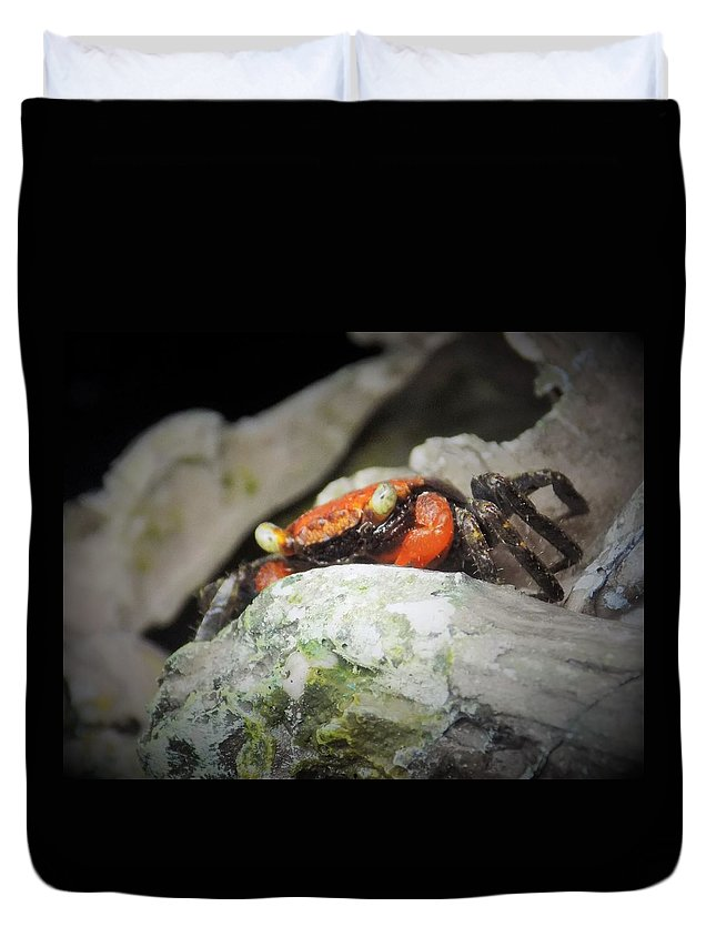 Crab Duvet Cover featuring the photograph Vampire Crab by Sarah Barba