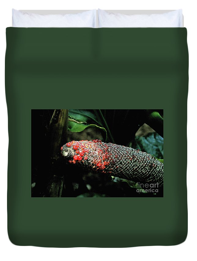 Vegetable Duvet Cover featuring the photograph Vegetable Not Animal by David Frederick