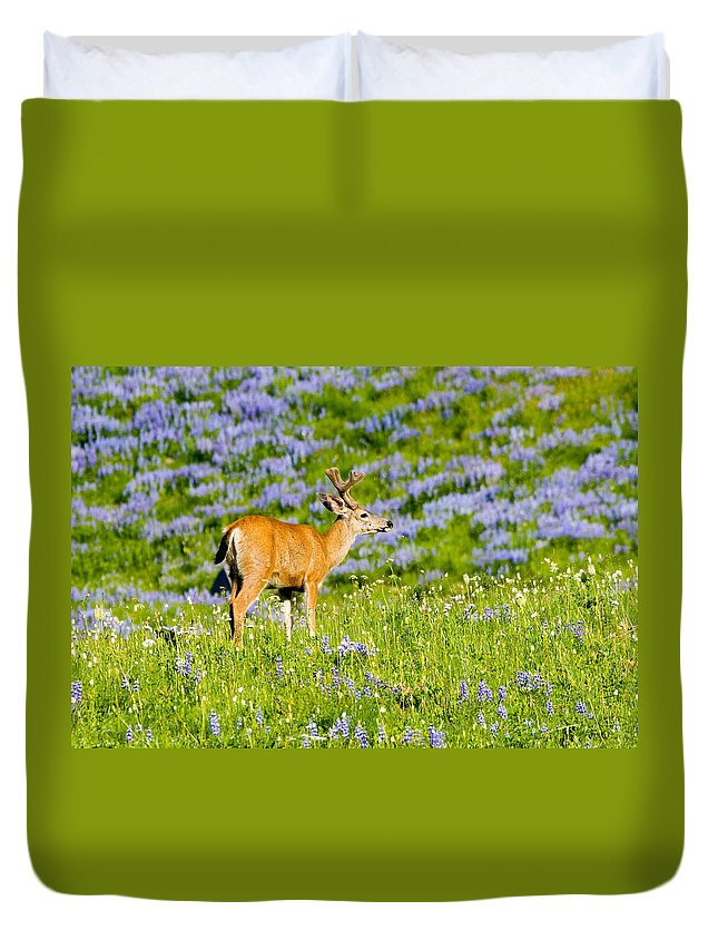 Deer Duvet Cover featuring the photograph Velvet On Lupine by Mike Dawson