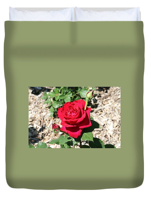 Rose Duvet Cover featuring the photograph Velvet Red Rose by Lynn Michelle