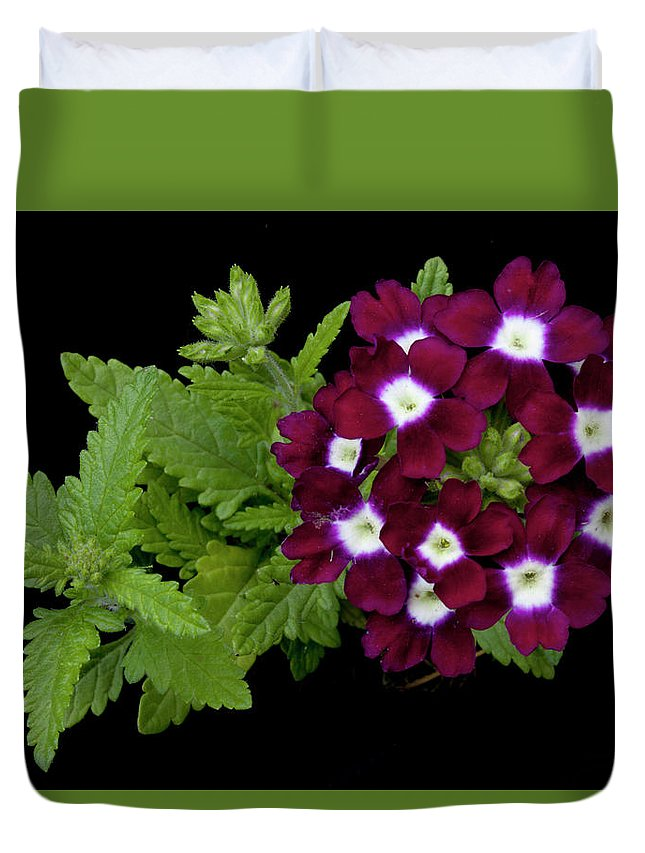 Verbena Duvet Cover featuring the photograph Verbena by George Sanquist