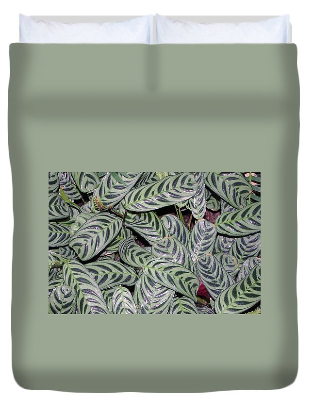 Leaves Duvet Cover featuring the photograph Verigated Green Leaves by Alice Markham