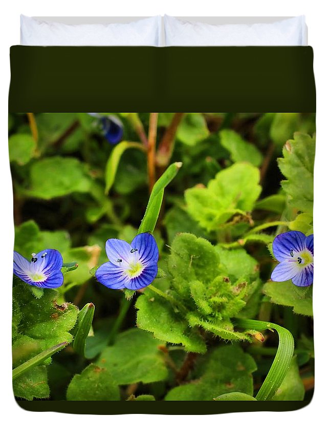 Speedwell Duvet Cover featuring the photograph Veronica Speedwell by Kathryn Meyer