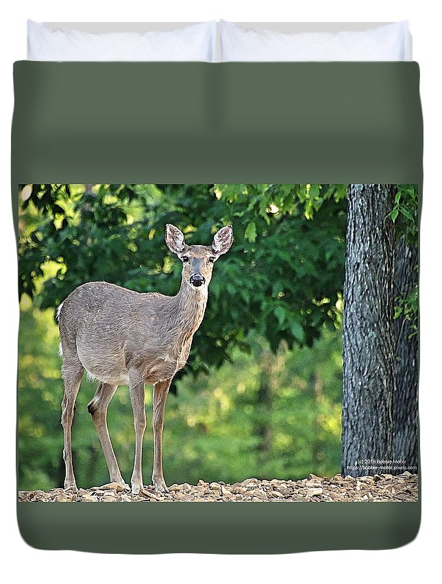 Deer Duvet Cover featuring the photograph Very Pregnant Doe by Bobbie Moller