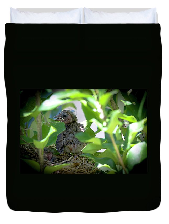 Bird Duvet Cover featuring the photograph Very Young Cardinal by TJ Baccari