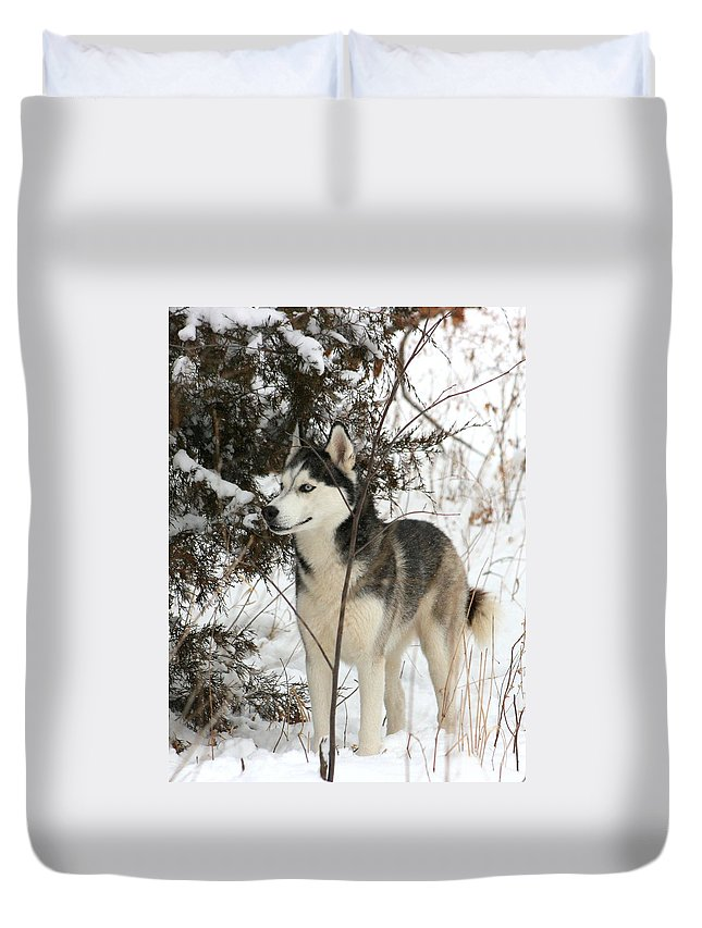 Animal Duvet Cover featuring the photograph Vigilant by David Dunham
