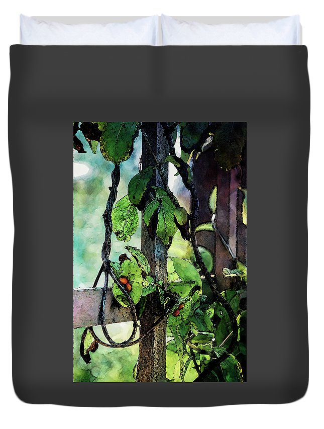 Vine Duvet Cover featuring the photograph Vine And Trellis Digital Watercolor 4472 W_2 by Steven Ward
