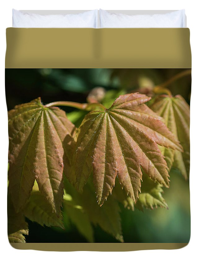 Astoria Duvet Cover featuring the photograph Vine Maple Leaves by Robert Potts