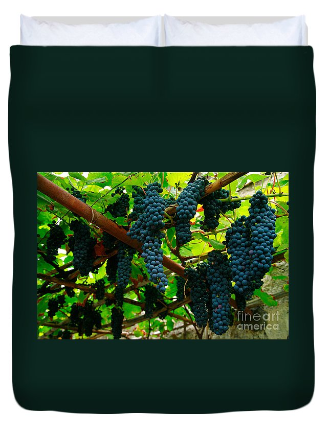 Countryside Duvet Cover featuring the photograph Vines by Gaspar Avila