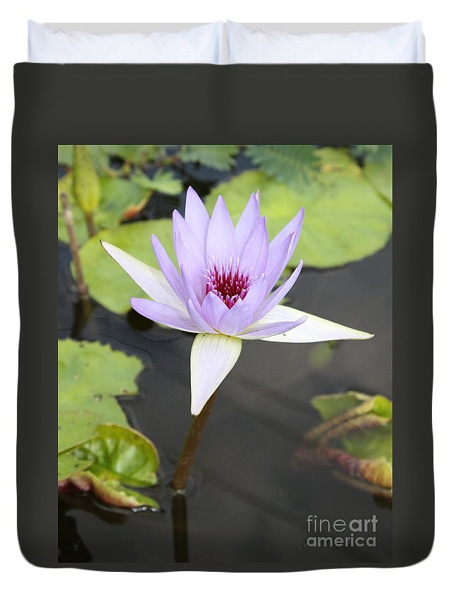 Lotus Duvet Cover featuring the photograph Violet Lotus by Christiane Schulze Art And Photography