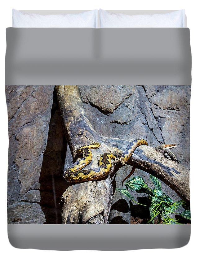 Vipera Duvet Cover featuring the photograph Vipera Berus by Fabio Gomes Freitas