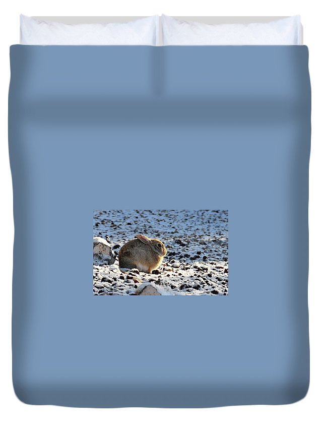 Animal Duvet Cover featuring the photograph Wabbit by David Arment