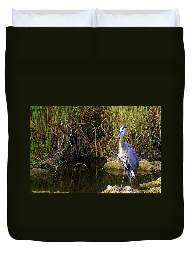 Bird Duvet Cover featuring the photograph Waiting by Marty Koch