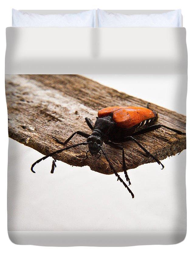 Cumberland Duvet Cover featuring the photograph Walking Beetle by Douglas Barnett