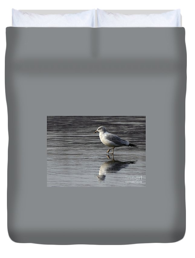 Seagull Sea Gull Bird Avian Nature Wildlife Duvet Cover featuring the photograph Walking On Water 4850 by Ken DePue