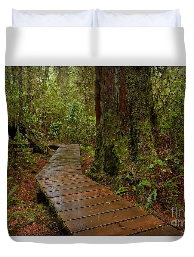 Pacific Rim National Park Duvet Cover featuring the photograph Wandering Through The Rainforest by Adam Jewell
