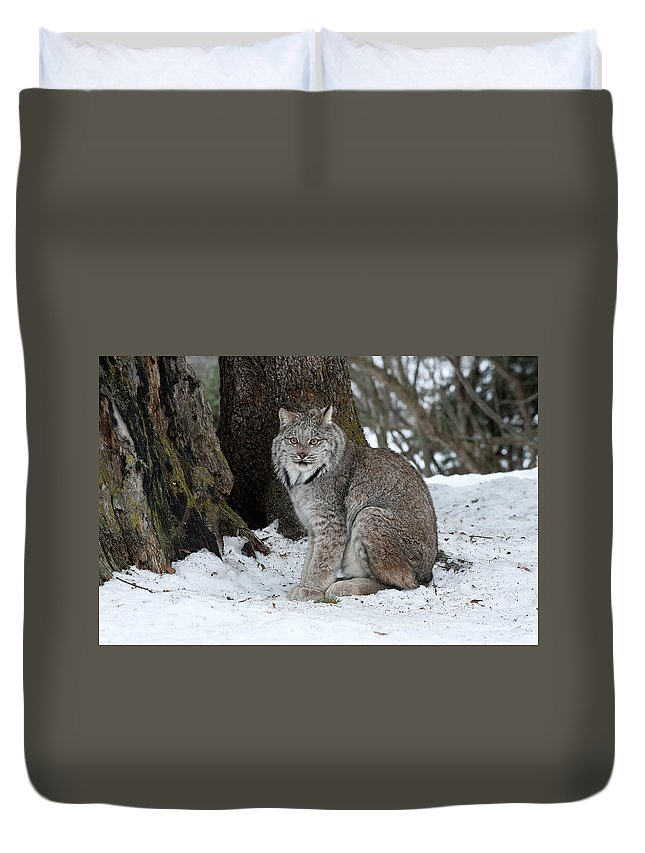 Lynx Duvet Cover featuring the photograph Watching Me Watch You by Sandra Bronstein