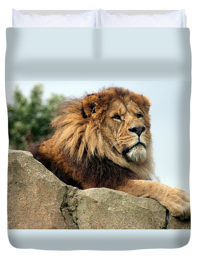 Photograph Duvet Cover featuring the photograph Watching My Pride by Rosemary Colyer