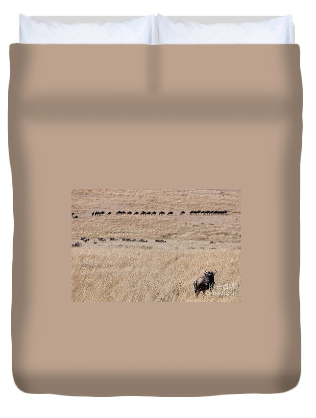 Africa Duvet Cover featuring the photograph Watching The Herd by Colette Panaioti