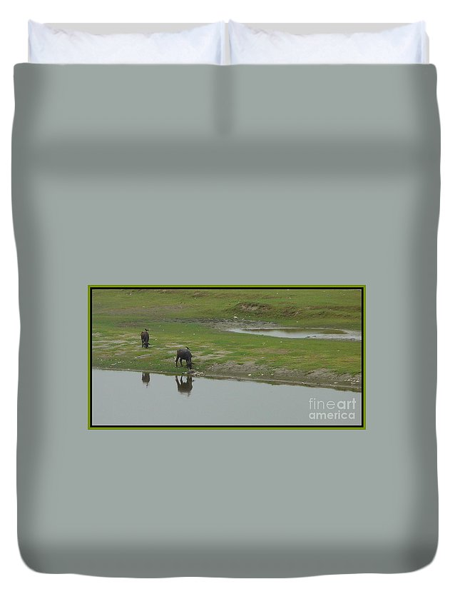 Water Duvet Cover featuring the photograph Water Buffaloe by Anita Goel
