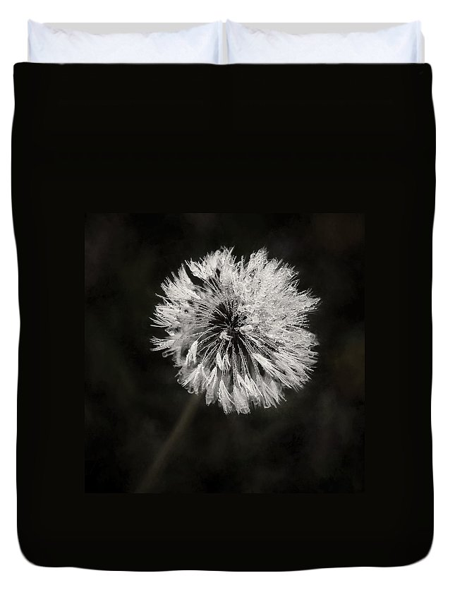 Dandelion Flower Duvet Cover featuring the photograph Water Drops On Dandelion Flower by Scott Norris